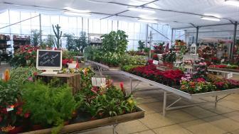 8f35e2bf26fe Jardinerie CHAMPS FLEURS, Jardinerie en France